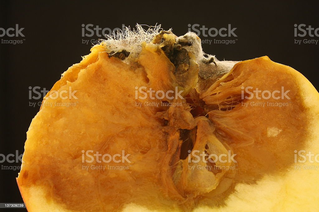 Rotting Apple Cross Section royalty-free stock photo