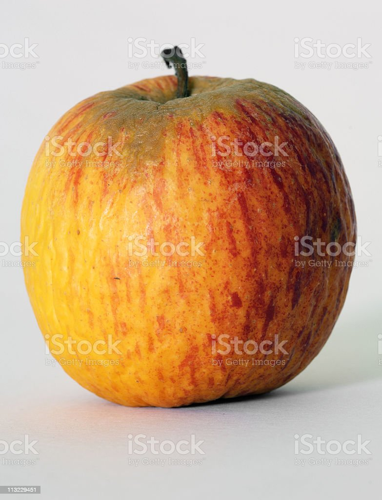 rotting drying ageing apple with wrinkled skin royalty-free stock photo