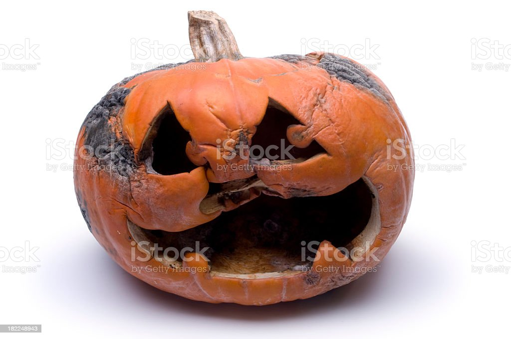 Rotting Halloween pumpkin on a white background stock photo