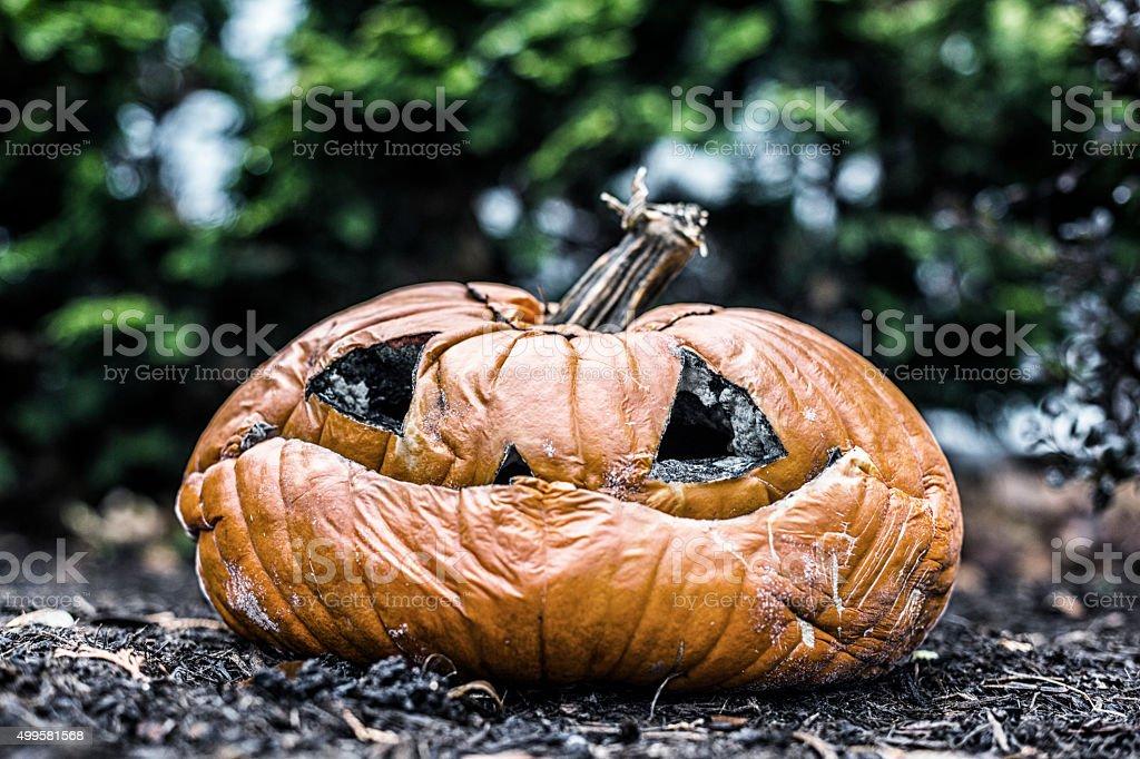 Rotting Jack O' Lantern Pumpkin Long After Halloween stock photo