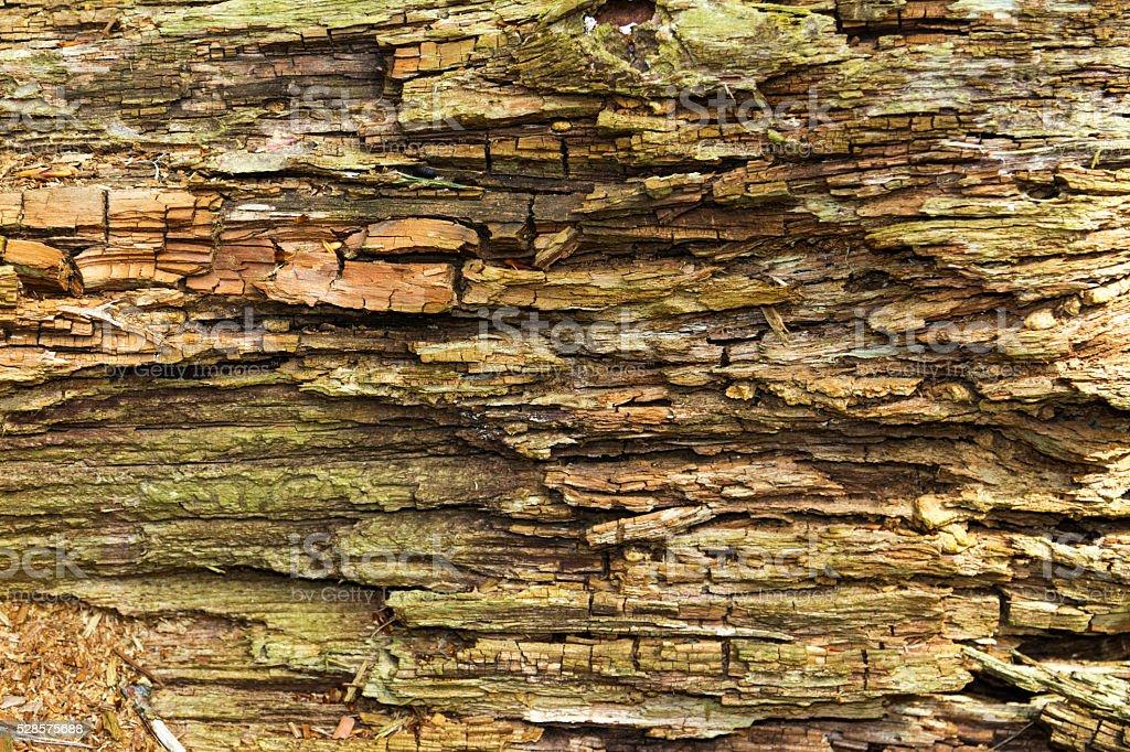 Rotting Tree stock photo
