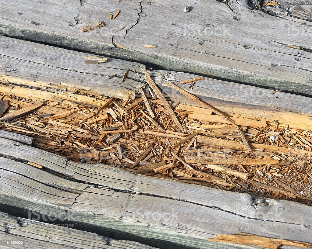 Rotting wood on boardwalk path stock photo