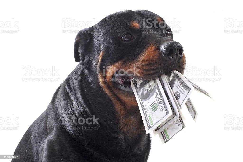 rottweiler and dollars stock photo