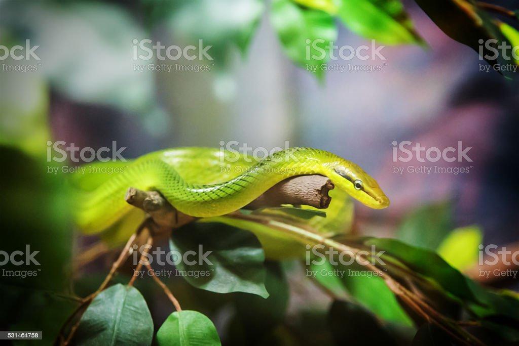 Rough Green Snake stock photo