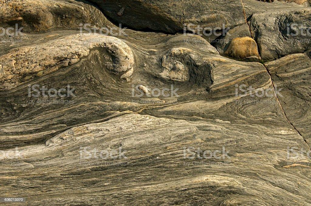 Rough petrified wood textures stock photo