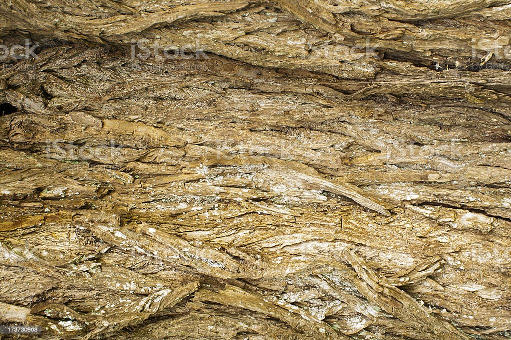 rough surface bark of willow royalty-free stock photo