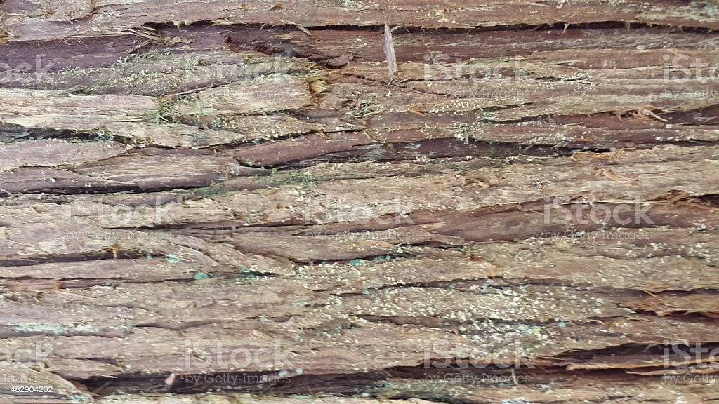 Rough tree bark surface - background stock photo