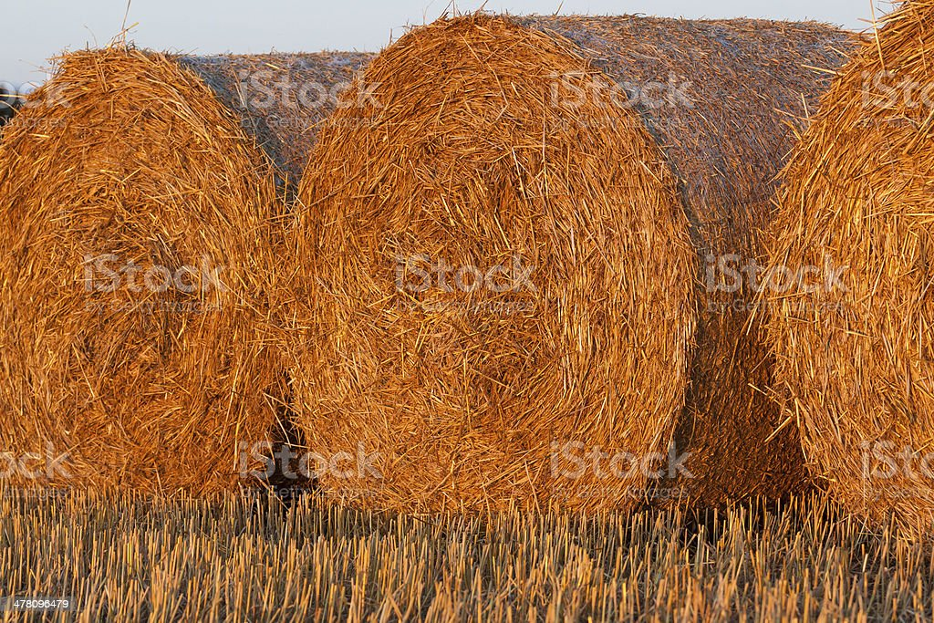round bale of straw in the meadow royalty-free stock photo