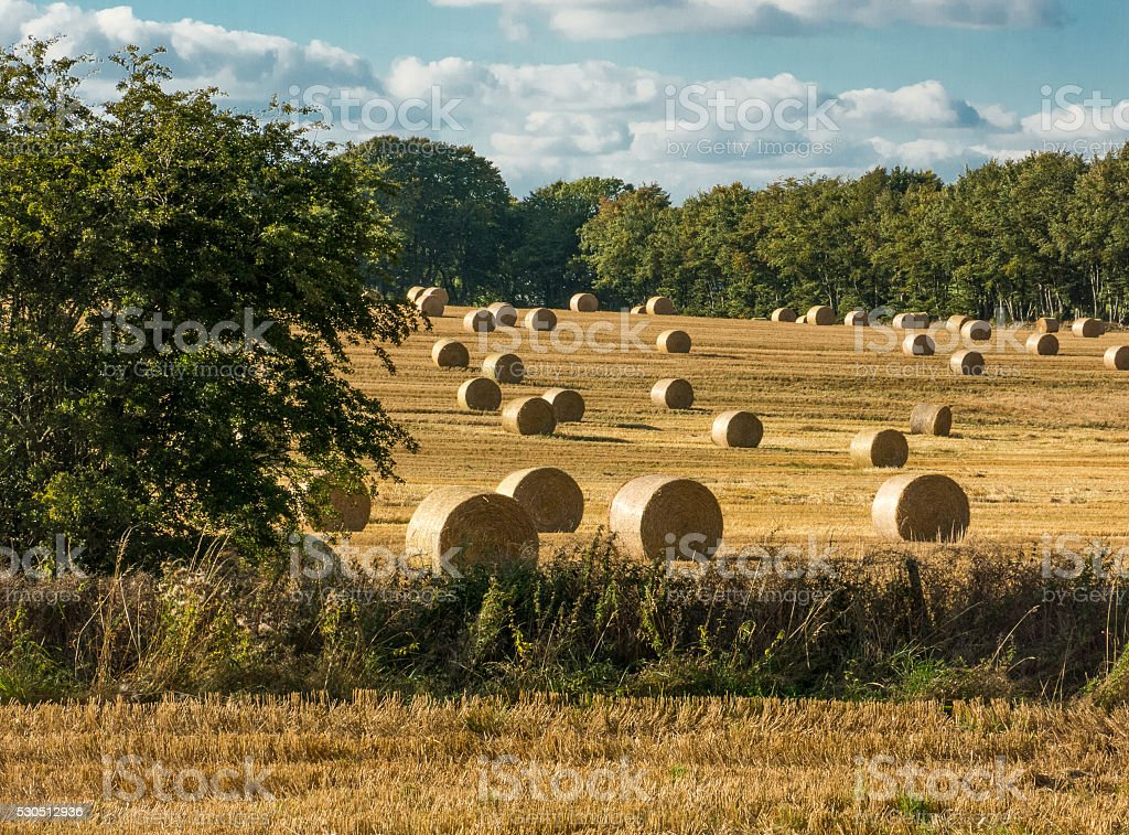 Round Bales of Hay Harvested in Field Aberdeenshire stock photo