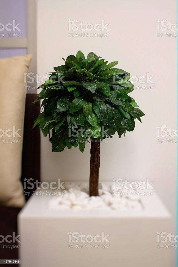 Round bonsai tree in square flower pot stock photo