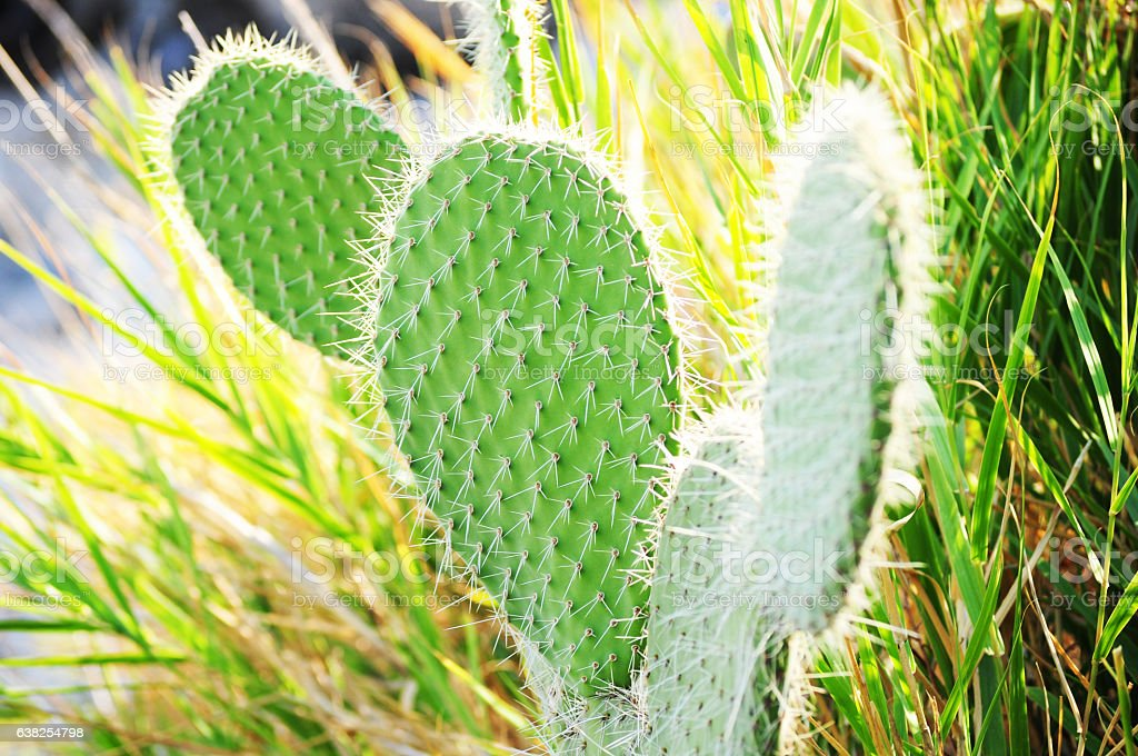Round Cactus in wildness stock photo