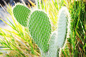Round Cactus in wildness