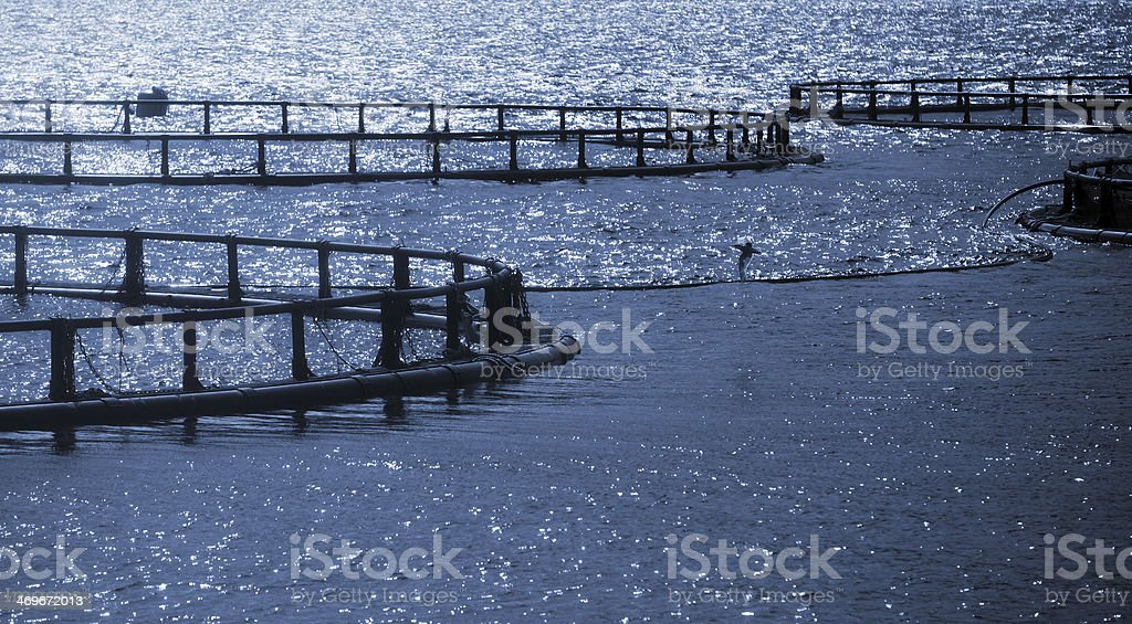 Round cages of Norwegian fish farm for salmon growing stock photo