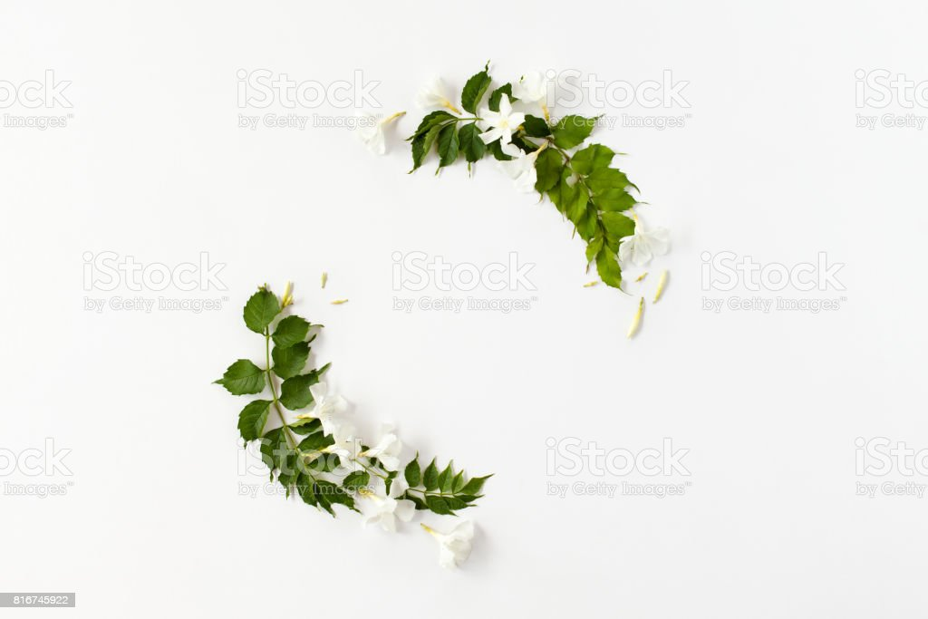 Round frame made of white flower buds and green leaves isolated. stock photo