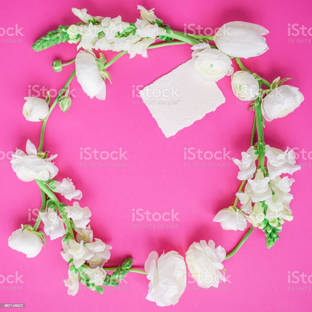 Round frame mane of white ranunculus and paper card on pink background. Flat lay, top view. stock photo