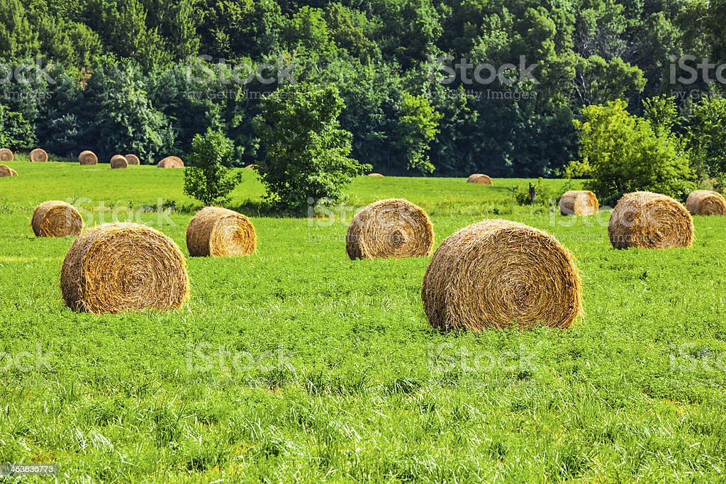 Round Hay Bails Grace a Lush Green Rural Landscape royalty-free stock photo