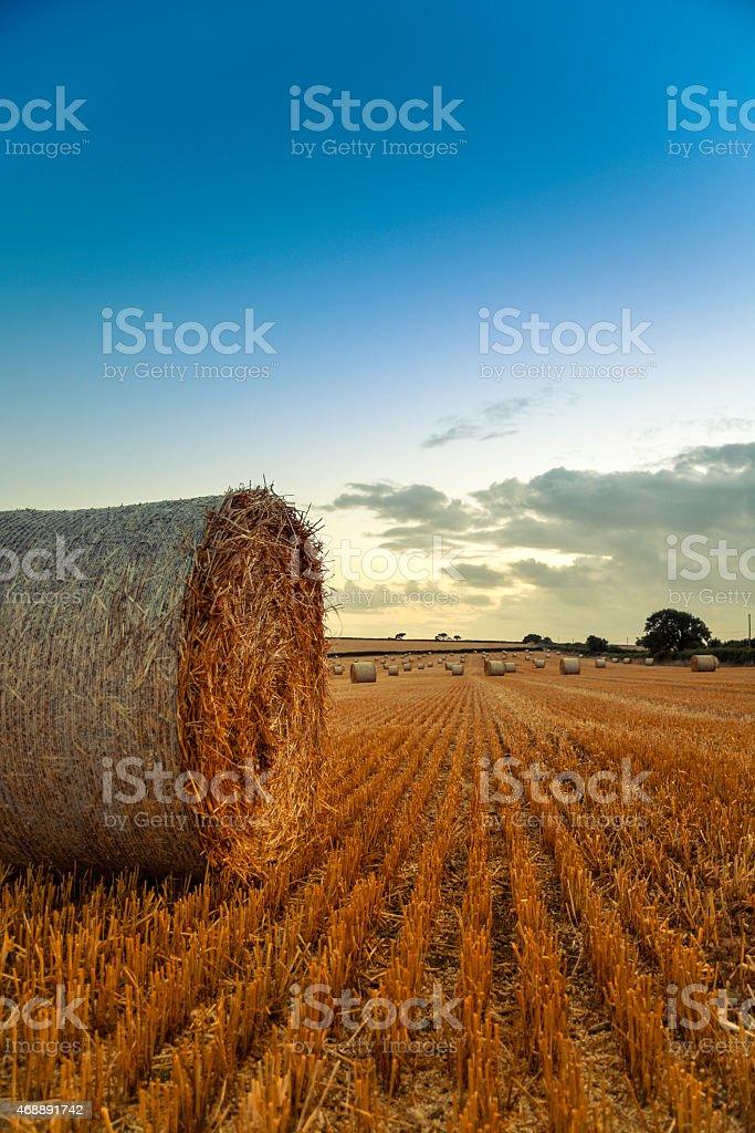 Round Hay Bale stock photo