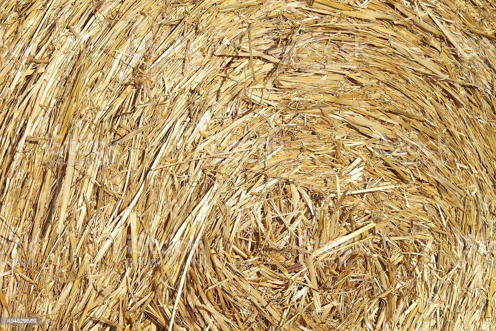Round hay bale royalty-free stock photo
