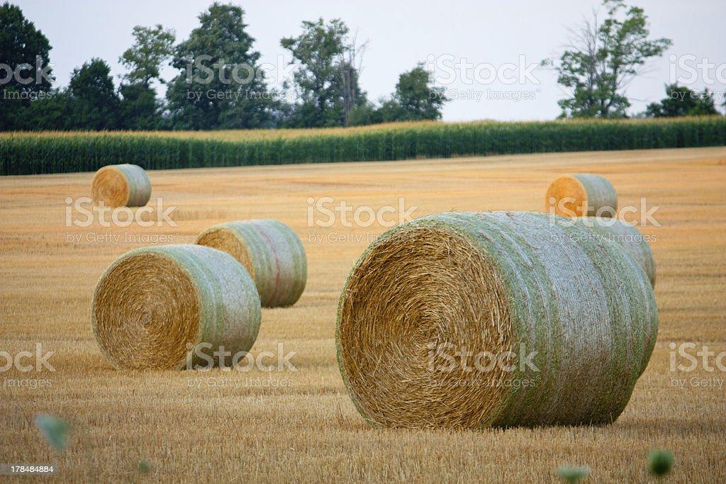 Round hay bales horizontal royalty-free stock photo