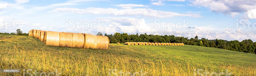 Round hay bales in a field stock photo