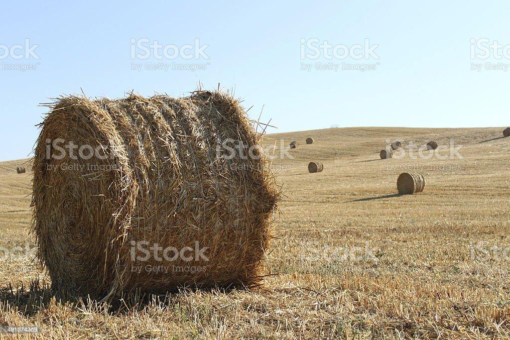 Round hay bales royalty-free stock photo