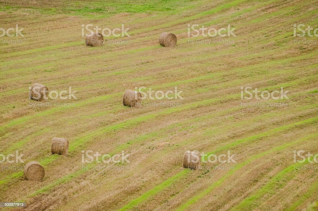 Round Hay Bales royalty-free stock photo