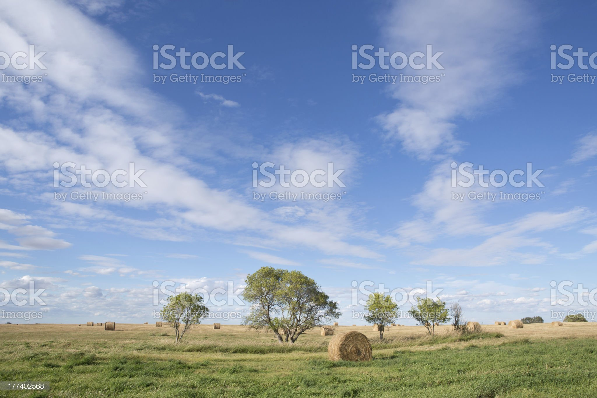 round haybales on a prairie field royalty-free stock photo