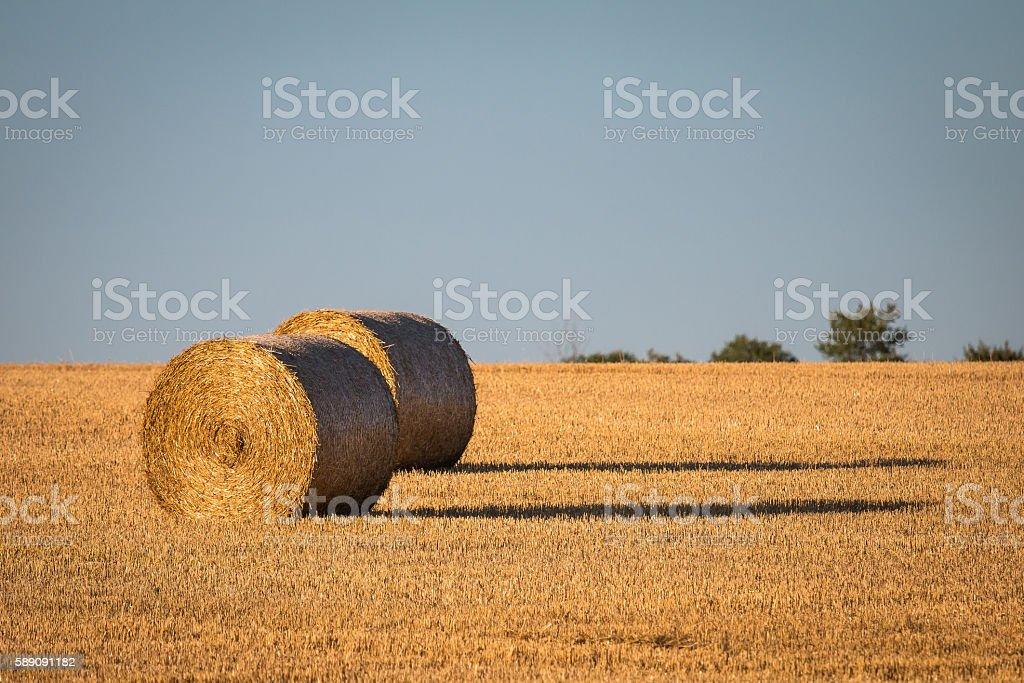 Round hey bales stock photo