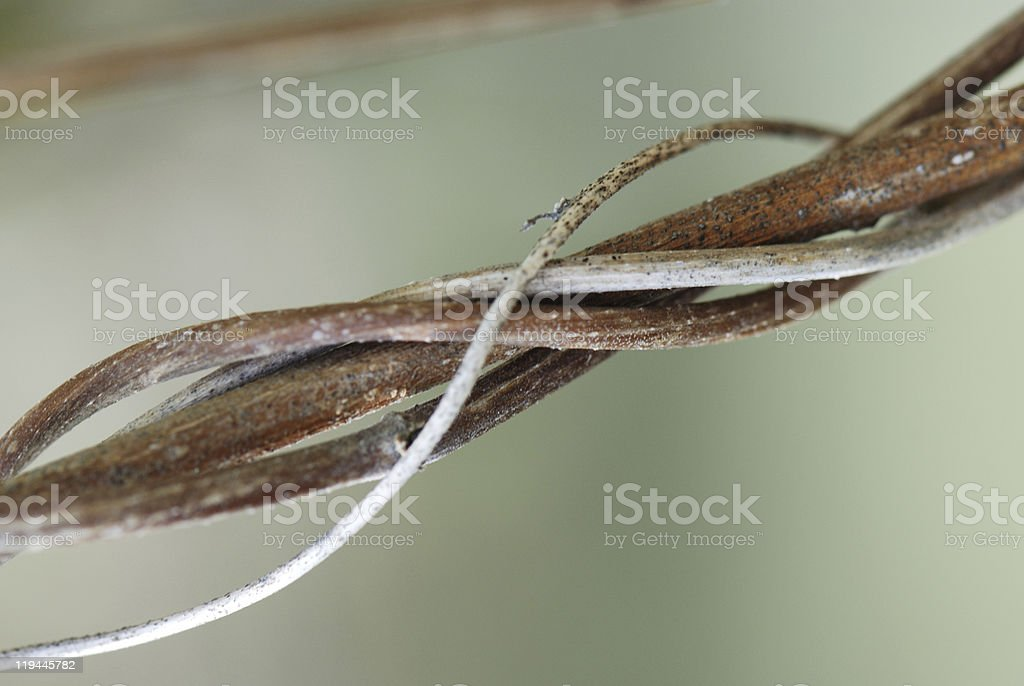 round lines of vine threads royalty-free stock photo