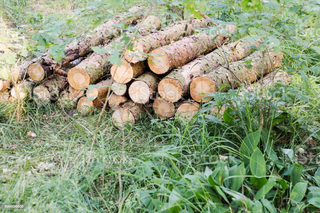 Round pine wood logs - piled up stock photo