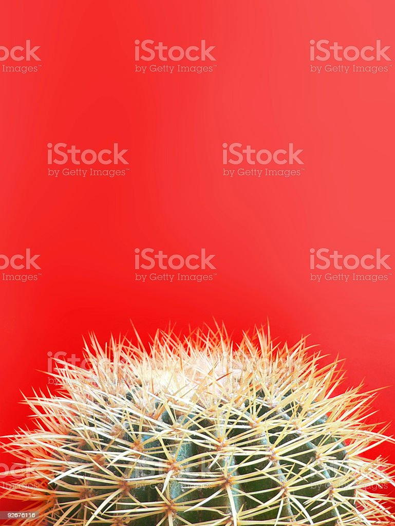 Round spiky cactus on bright red contrasting background stock photo
