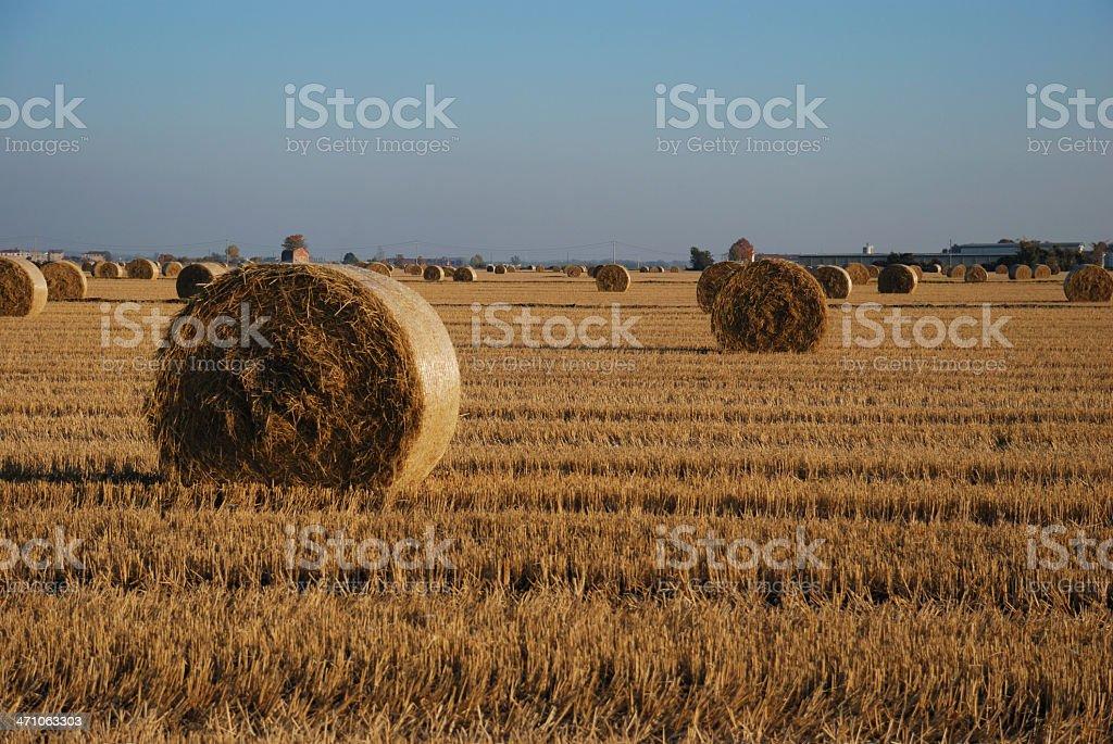 Round straw bale, Briona (Novara) Italy royalty-free stock photo