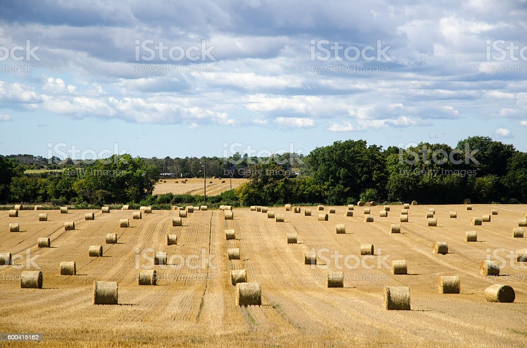Round strawbales in a field stock photo