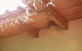 Round wasp nest on roof