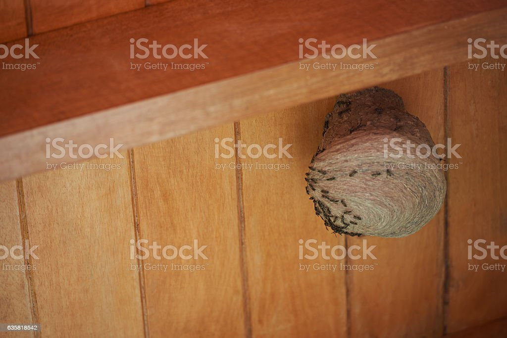 round wasp nest stock photo