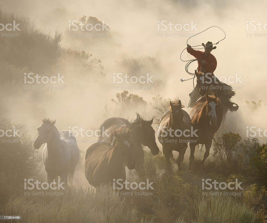 rounding the herd a hard working cowboy stock photo