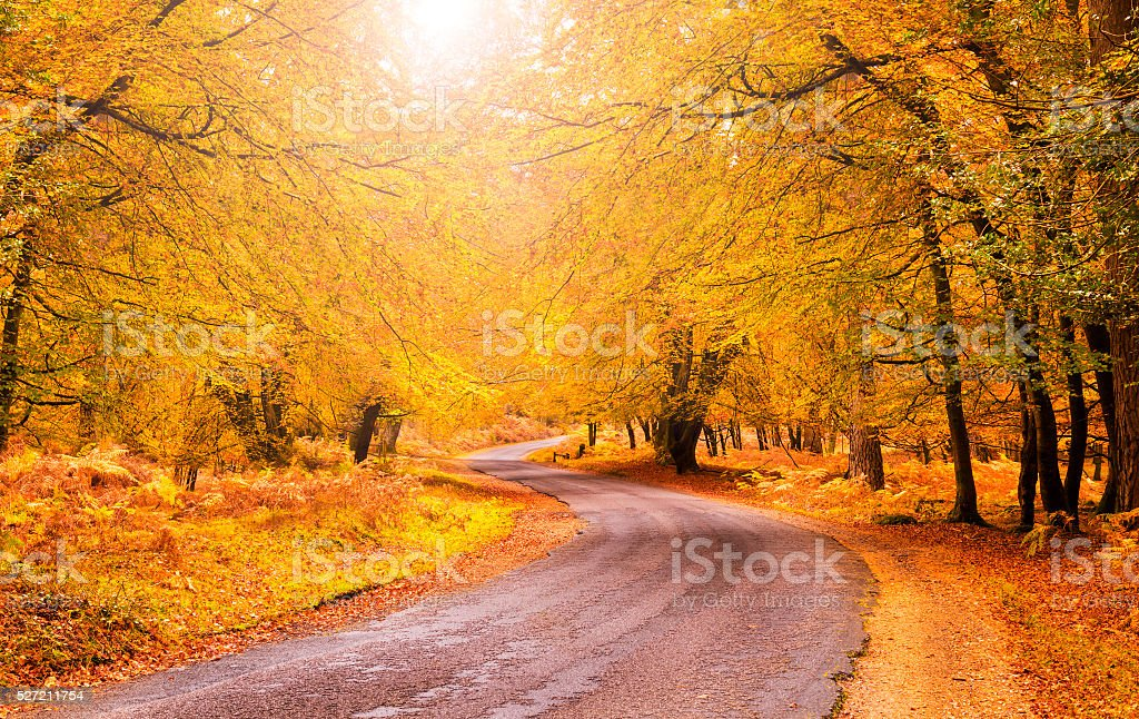 Route through orange and golden trees in the New Forest stock photo