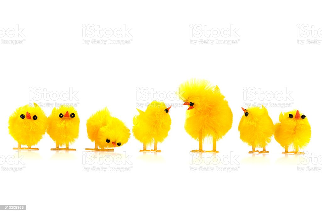 row of baby easter chicken talking together stock photo