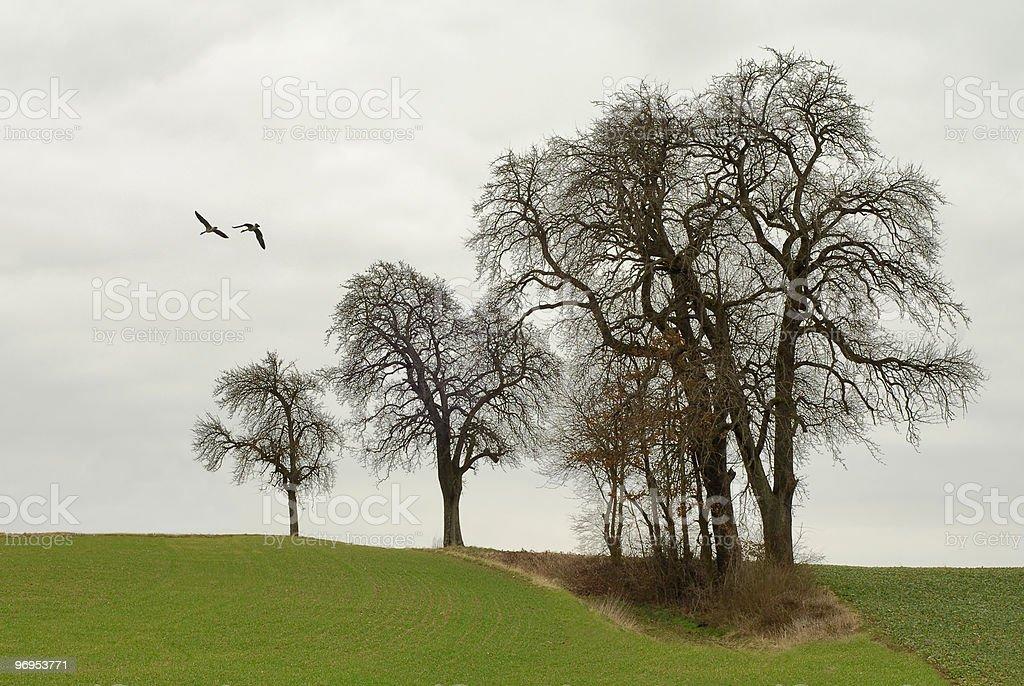 Row of bare trees stock photo