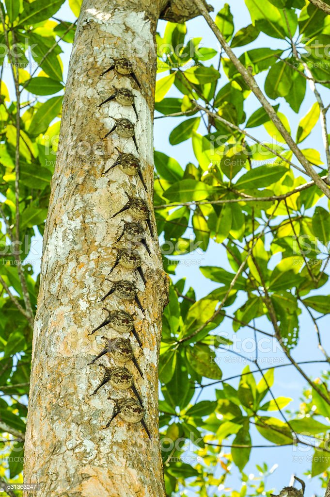Row of bats on tree trunk in rainforest stock photo