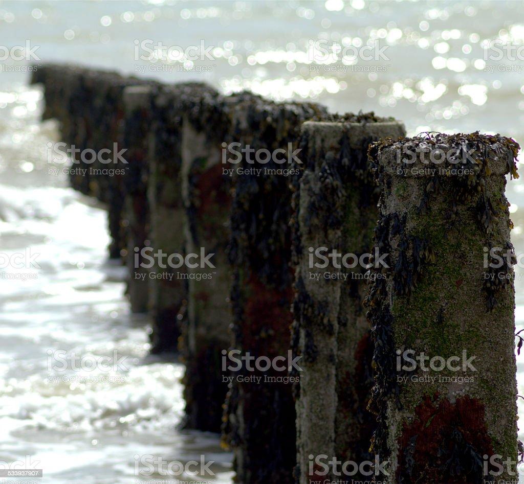 Row of Beach Posts stock photo