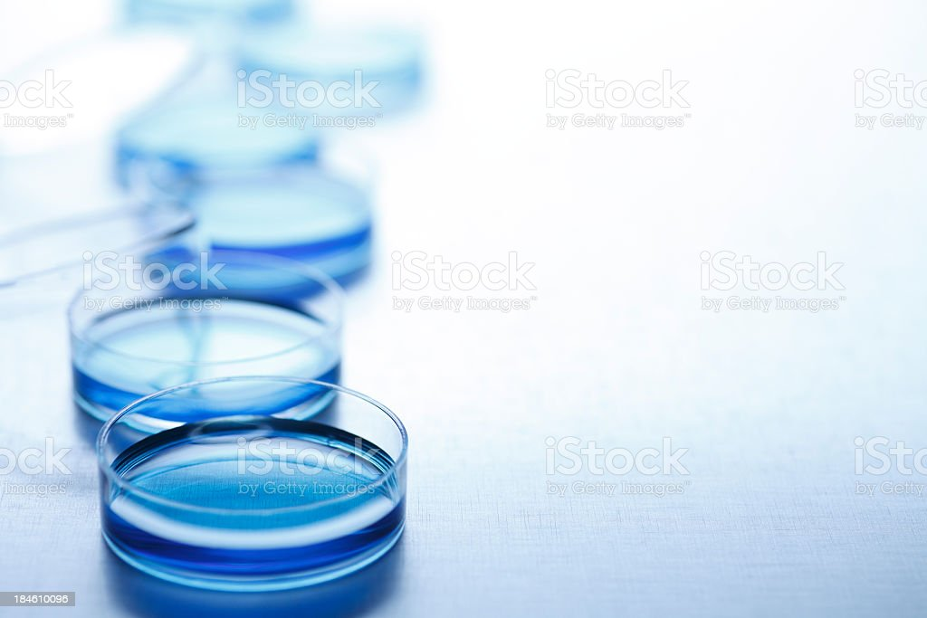 Row of blue petri dishes stock photo