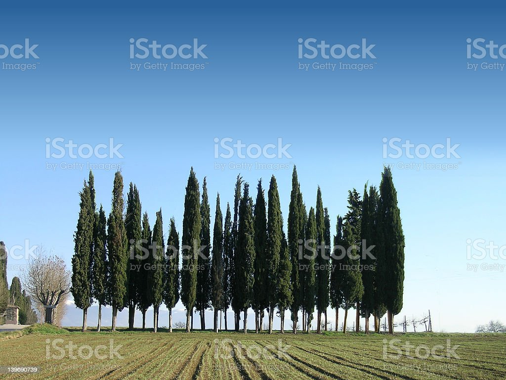 Row of cyprus trees in Umbria royalty-free stock photo