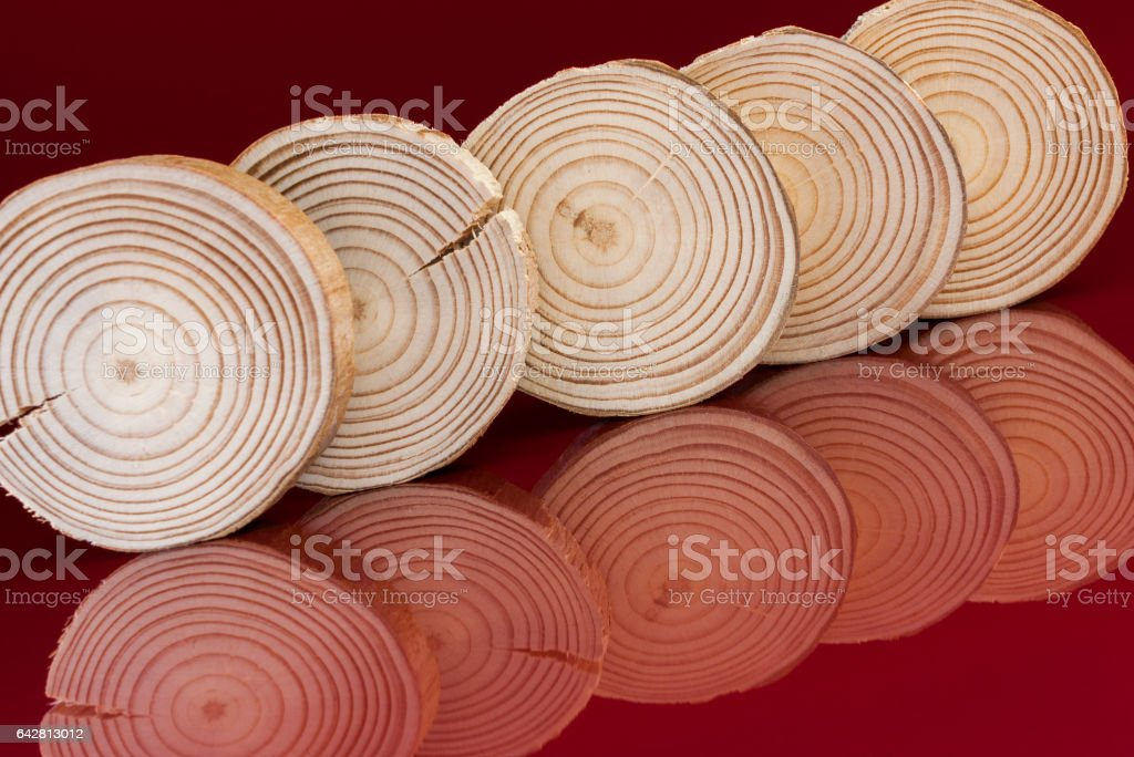 Row of five pine saw cuts and their reflections are tilted on red background. stock photo