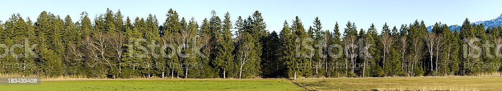 Row of green trees - wood XXL Landscape Panorama royalty-free stock photo