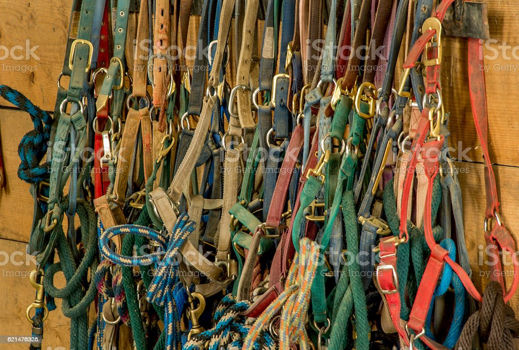 Row of Halters, Horse Barn stock photo