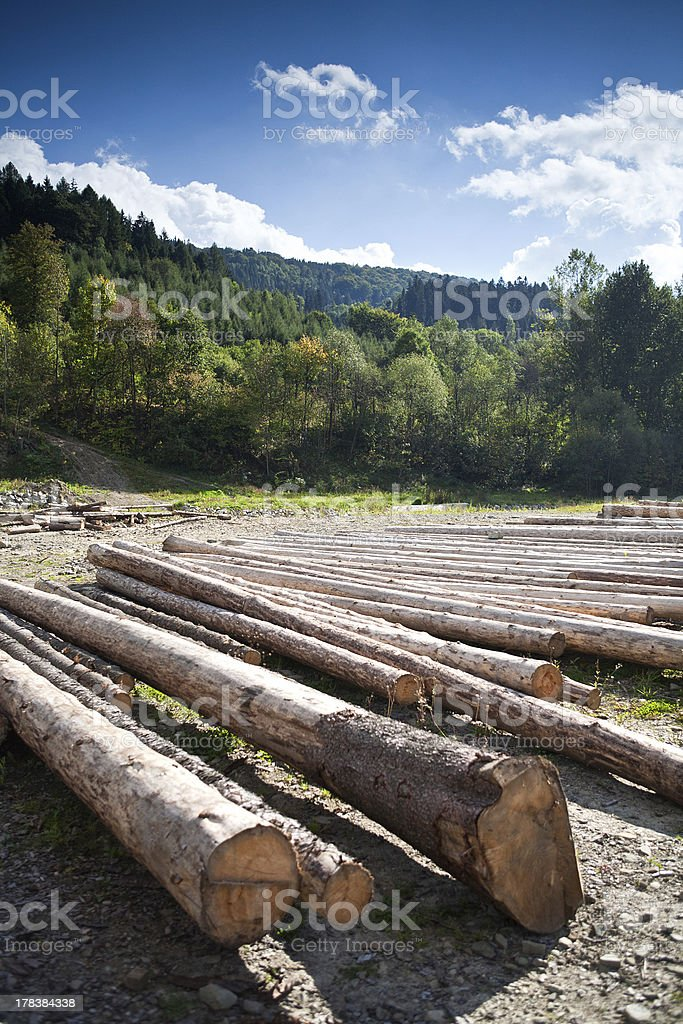 Row of logs lying on the ground royalty-free stock photo