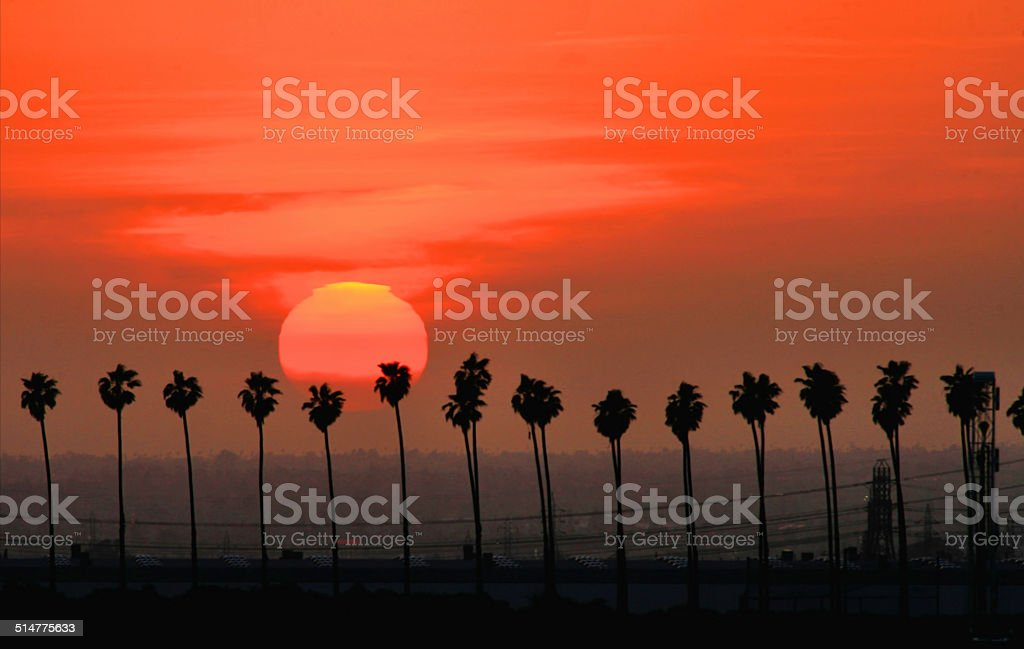 Row of Palms at Sunset stock photo