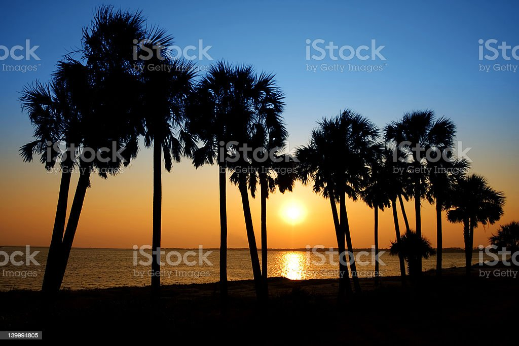 Row of Palms by the Shore stock photo