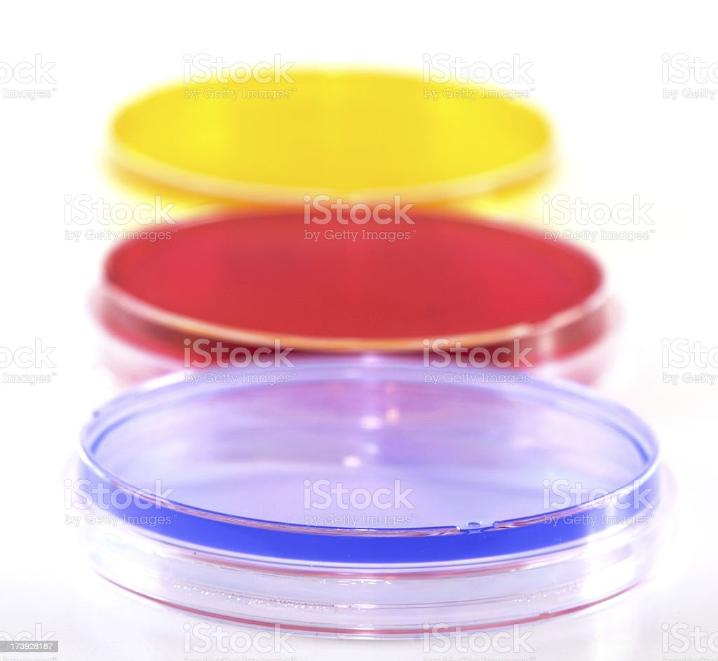 Row of Petri Dishes royalty-free stock photo
